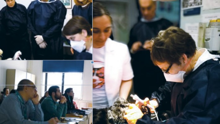 5th Veterinary workshop on  electroporation-based treatments